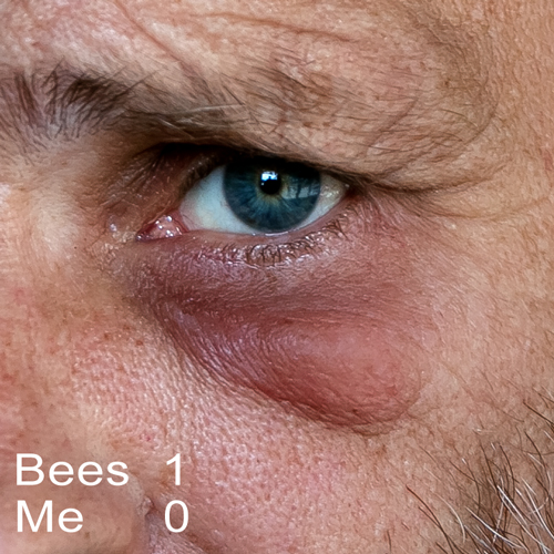 bee-5276